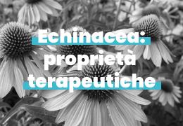 Echinacea: proprietà terapeutiche