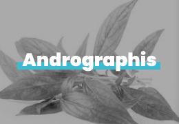 ANDROGRAPHIS: UNA PIANTA DALLE MOLTEPLICI PROPRIETA'