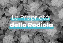 LE PROPRIETA' DELLA RODIOLA