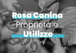 ROSA CANINA: PROPRIETA' E UTILIZZO